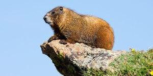 Marmot_Cover_WaltKaesler_688x344
