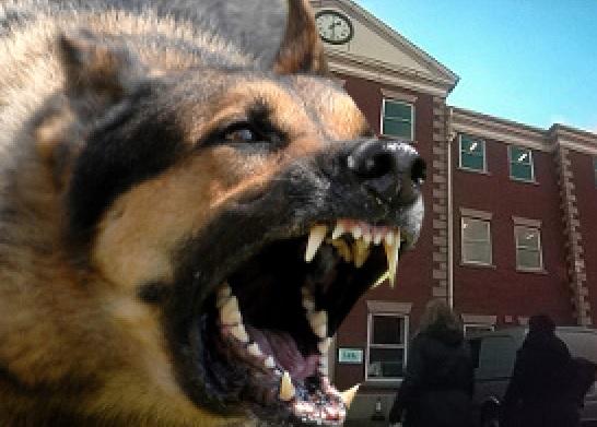 watchdog-ico