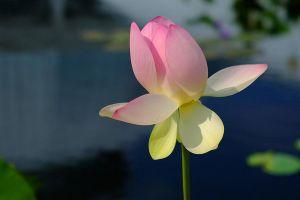 Flower_1_(1_of_1)-c20.jpg