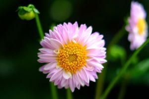 Flower_2_(1_of_1).jpg