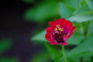 Flower_4_(1_of_1).jpg