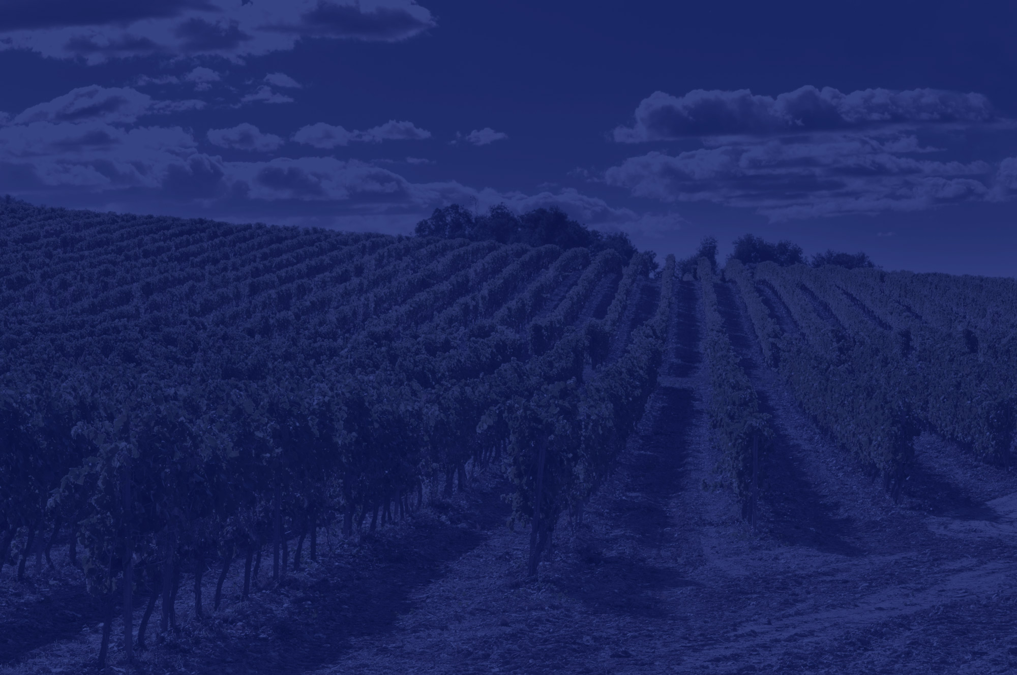 Home – Discover Our Wines
