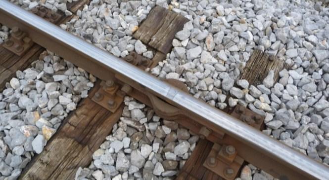 V Mednem vlak povozil osebo, v Grosupljem rop pošte