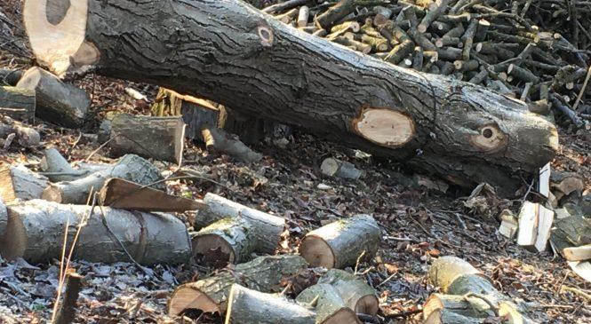 Smrtna nesreča pri delu v gozdu