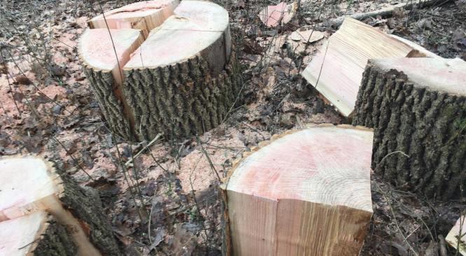 Na območju Lendave obravnavana tatvina lesa