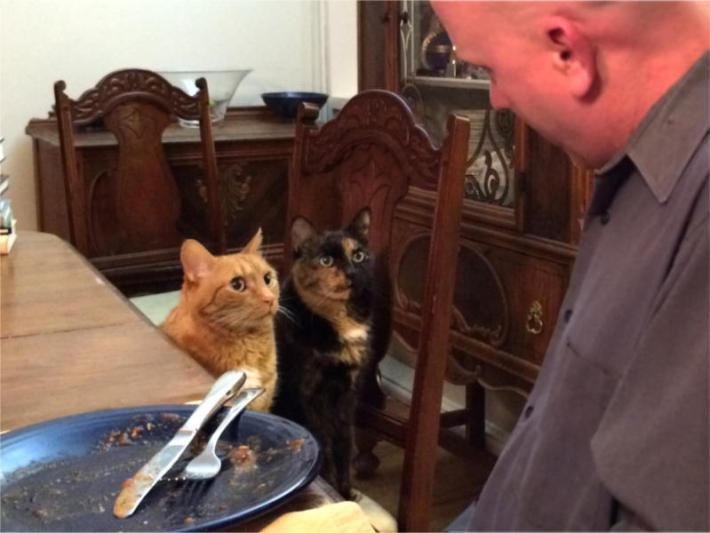 The cats Tink and Zeugma beg to lick the dinner plate.