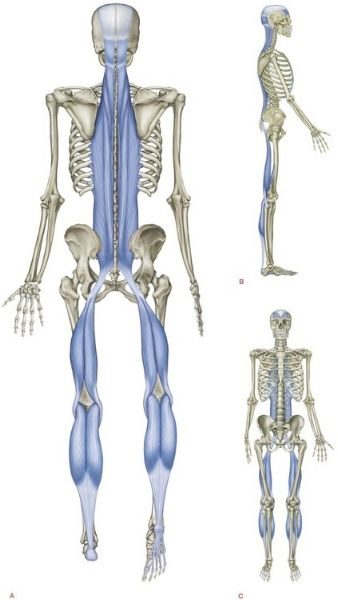 So what is Fascia?