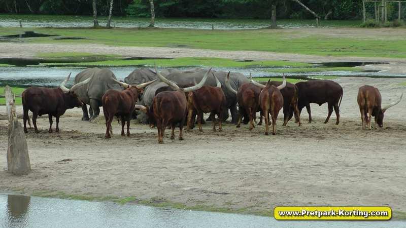Safaripark Beekse Bergen korting trip report blog 10