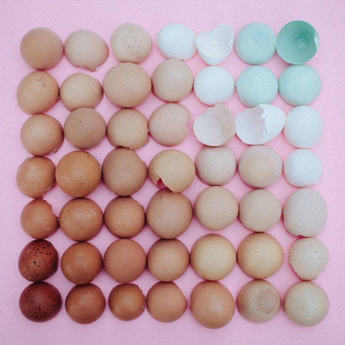Color Coded Eggs by Emily Blincoe