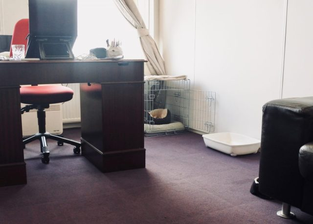 Er netjes uit blijven zien met een kantoorhond