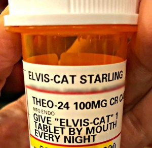 Elvis-Cat prescription