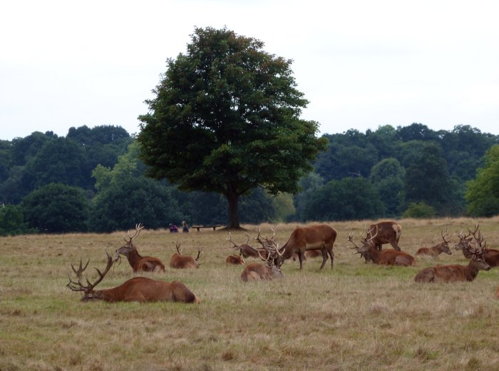 richmond park londres