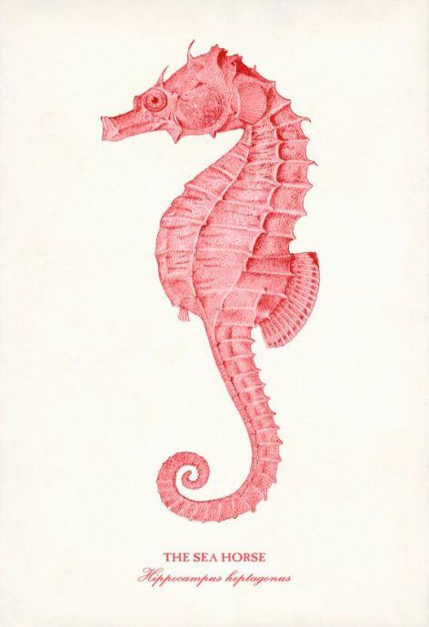 Coral Seahorse Illustration