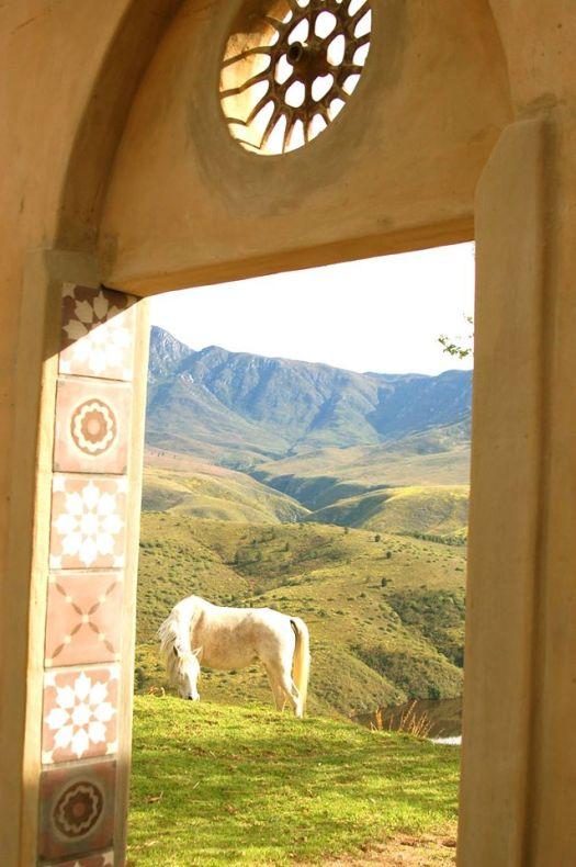 Akasha Mountain Retreat horses
