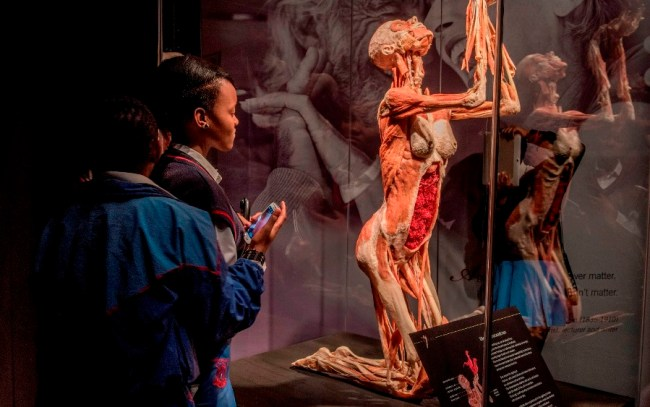 Body Worlds Vital Cape Town 2016