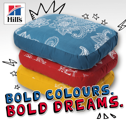 Introducing Hill's gorgeous dream-maker beds and their yummy new stew