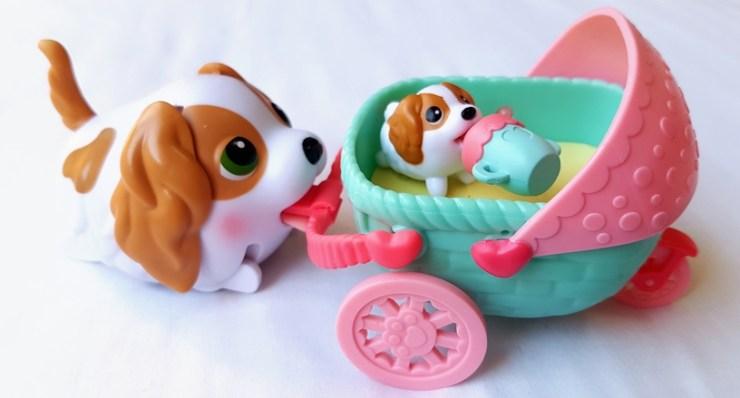 King Charles Spaniel Chubby Puppies Pretty Please Charlie