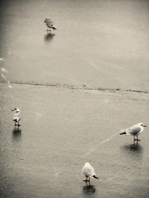 Seagulls resting on the frozen water