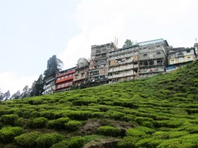 Darjeeling as viewed from the Happy Valley tea plantation