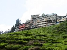 Darjeeling as viewed from the Happy Valley tea plantation