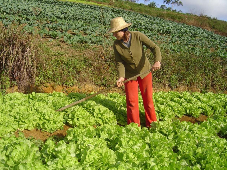 Aposentadoria do Agricultor Rural