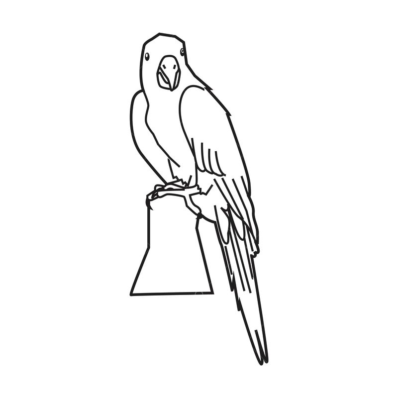 Parrot Outline Graphic Vector Stock By Pixlr