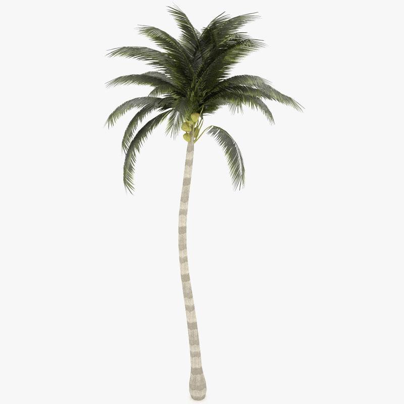 Palm Tall Tree 3d Model Obj - Modern Home Revolution