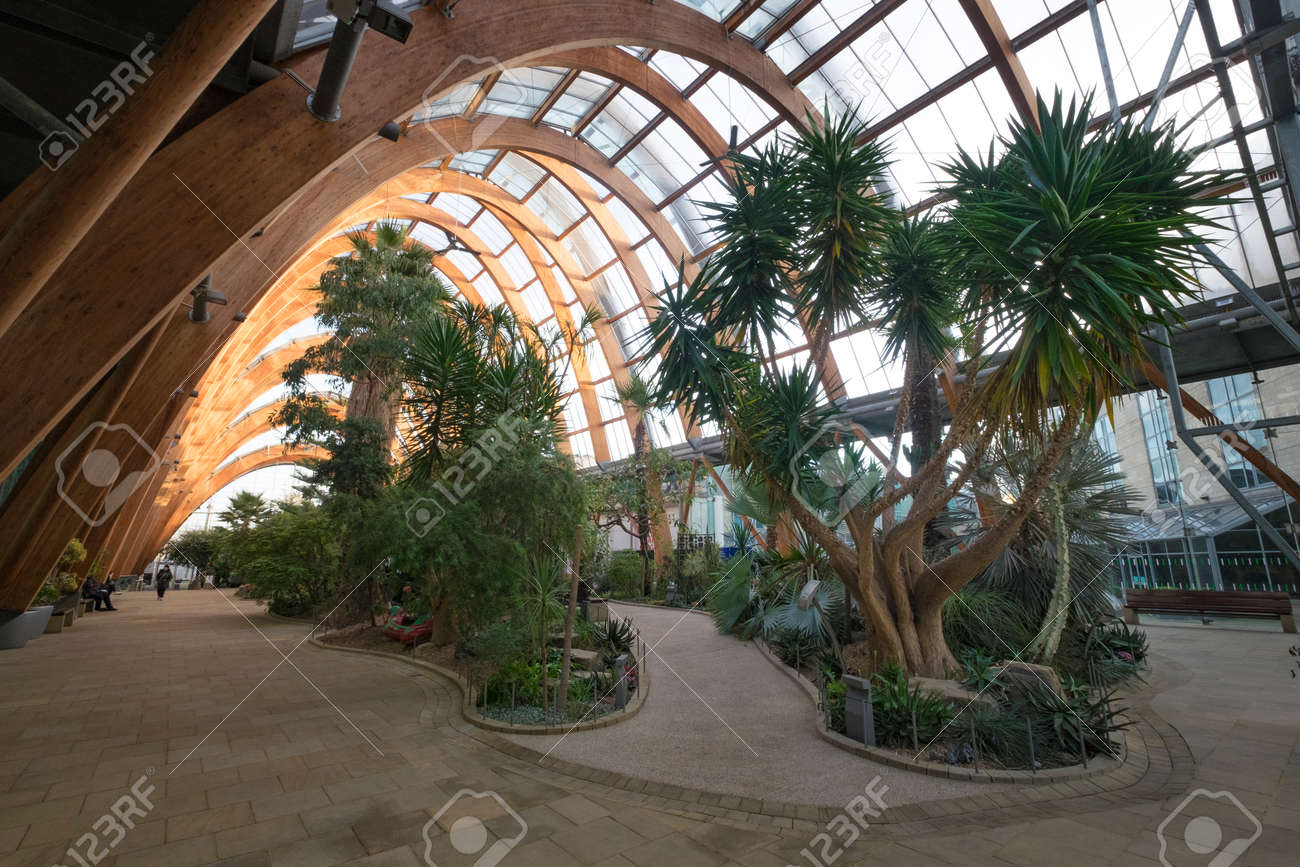 Sheffield Winter Gardens Interior Stock Photo  Picture And Royalty     Sheffield winter gardens interior Stock Photo   71005967