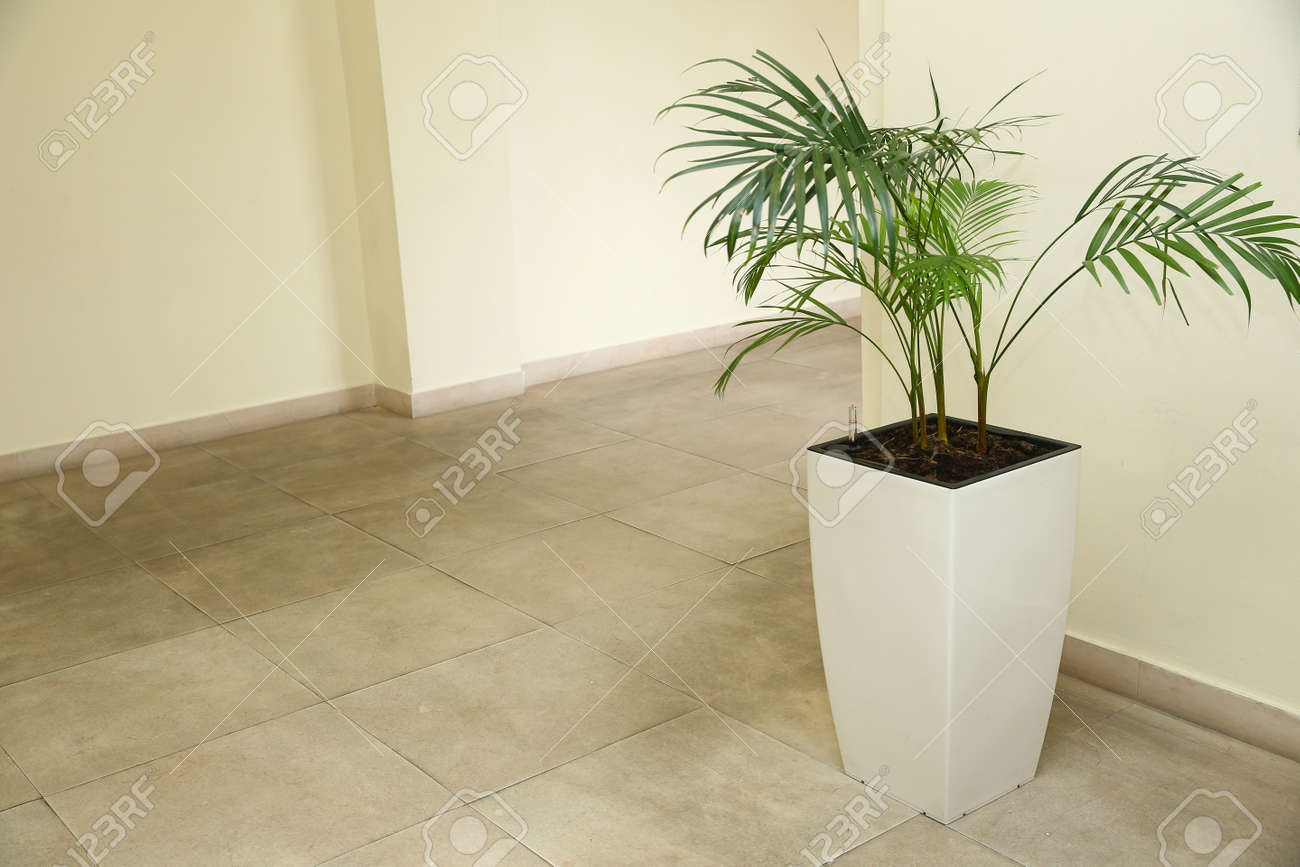 Indoor Flower Pots Plants Large Vases In A Row Green Plant Stock Photo Picture And Royalty Free Image Image 146166922