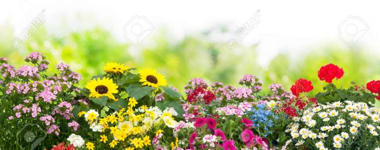 Background With The Summer Flowers In Garden Stock Photo  Picture     Background with the summer flowers in garden Stock Photo   58717230