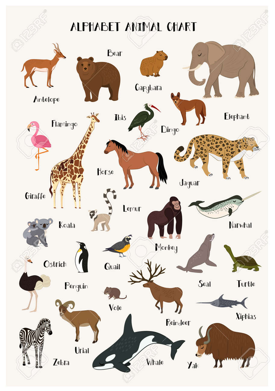 Alphabet Animal Chart Set Isolated Vector Illustration Abc For Royalty Free Cliparts Vectors And Stock Illustration Image 70185854