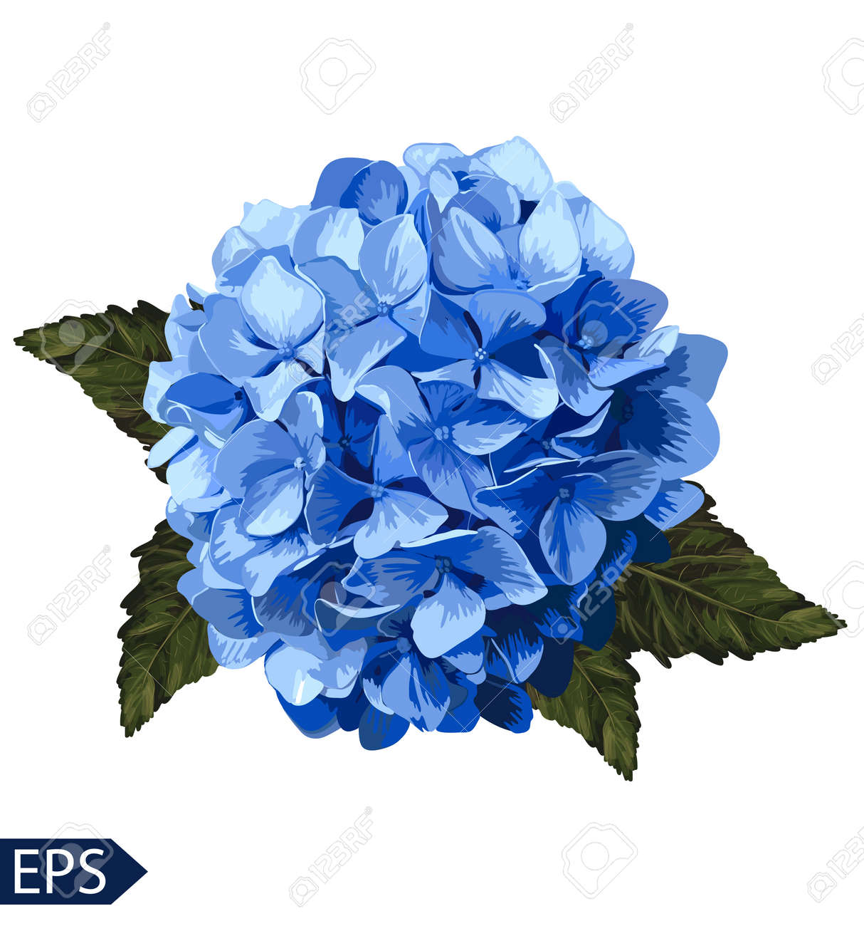 Vector Blue Realistic Hydrangea  Lavender  Illustration Of Flowers     Vector   Vector blue realistic hydrangea  lavender  Illustration of flowers   Vintage  Can be used for gift wrapping paper  EPS
