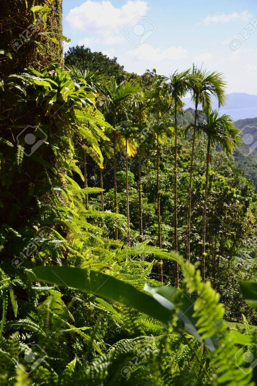 150 free images of amazon forest. Equatorial Forest Vegetation Stock Photo Picture And Royalty Free Image Image 42124067
