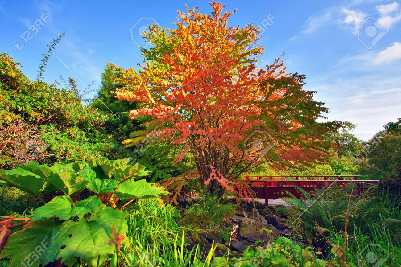 https fr 123rf com photo 37562545 arbre d automne et le pont en bois rouge au parc chinois royal botanic garden c3 89dimbourg c3 89cosse html