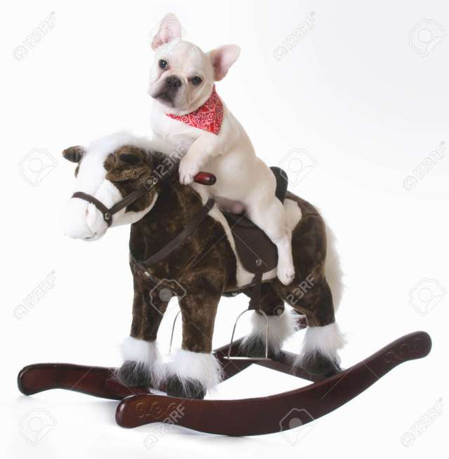 dog riding a rocking horse - french bulldog puppy stock photo