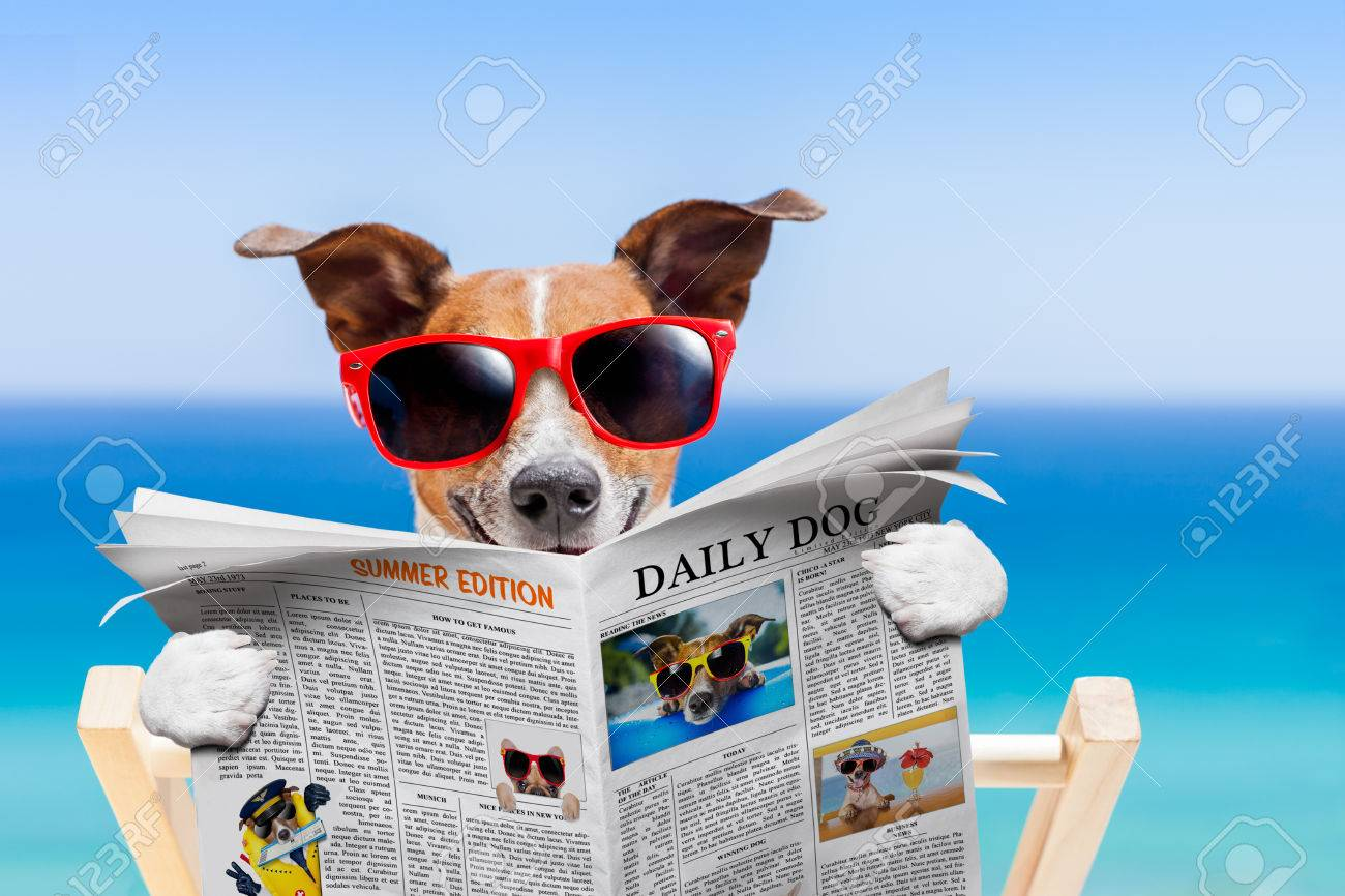 jack russell dog , reading newspaper on hammock at the beach