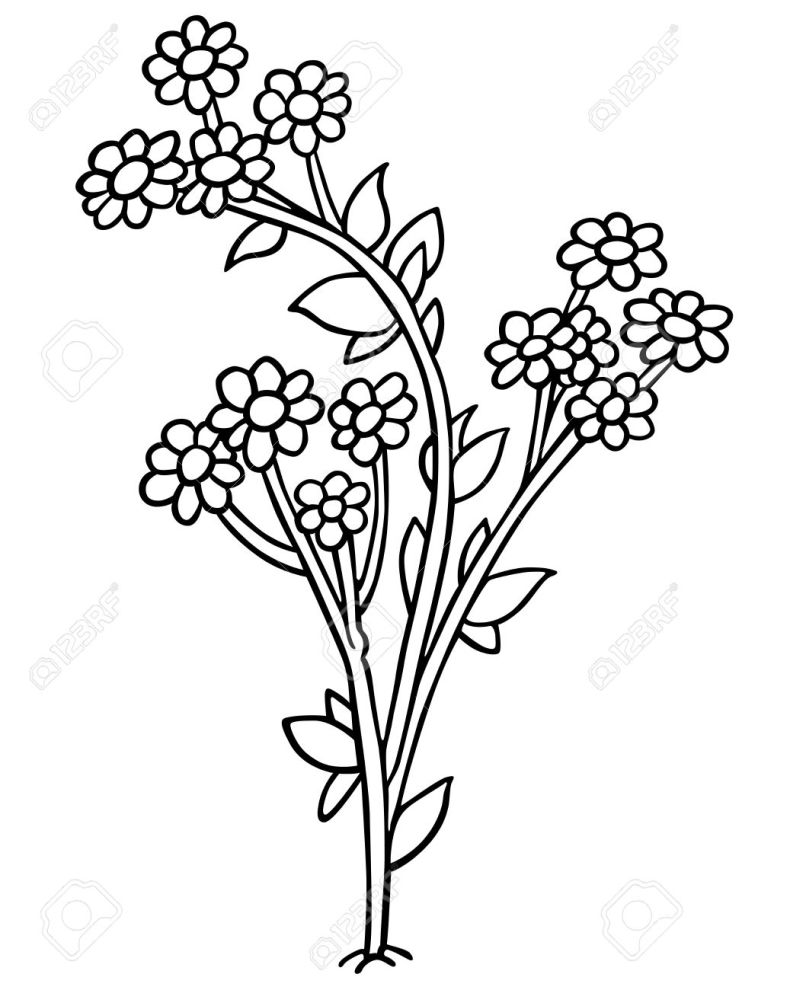 Cartoon Images Of Flowers Black And White Imaganationface