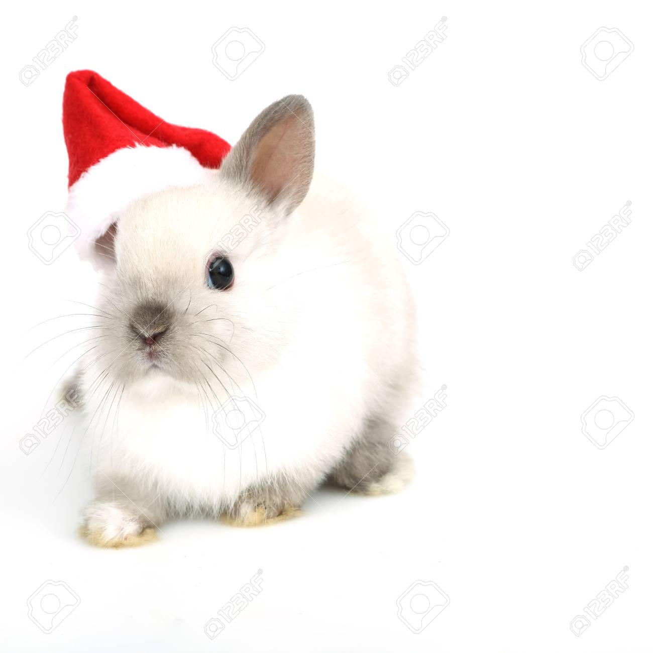 Cute White Baby Bunny Rabbit On The White Background Stock Photo Picture And Royalty Free Image Image 91262870