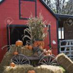 A Fall Scene Red Barn Wooden Wagon Straw Hay Pumpkins Halloween Stock Photo Picture And Royalty Free Image Image 547093