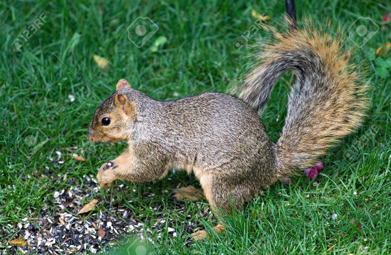 Image result for images of a squirrel under a bird feeder