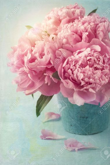 Peony Flowers In A Vase Stock Photo  Picture And Royalty Free Image     Peony flowers in a vase Stock Photo   20270568