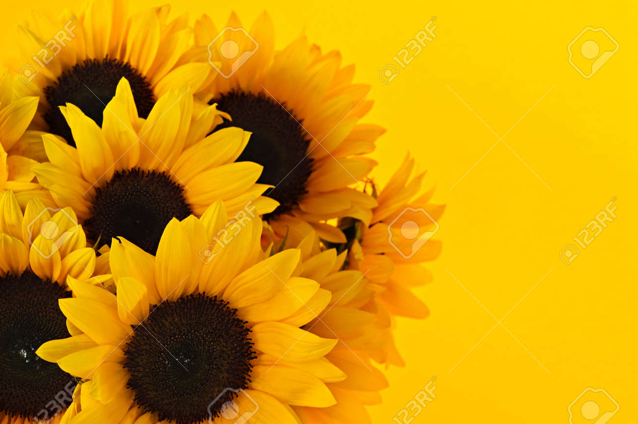 Bouquet Of Sunflower Flowers On Yellow Background Stock Photo     Bouquet of sunflower flowers on yellow background Stock Photo   6121183