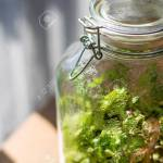 Plants In A Closed Glass Bottle Terrarium Jar Small Ecosystem Stock Photo Picture And Royalty Free Image Image 146334446