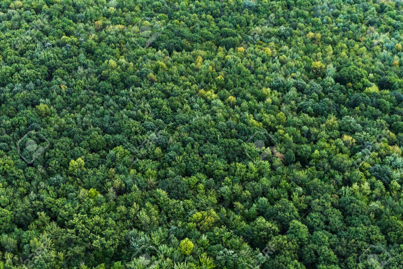 In hungary, floodplain forests are among the most endangered forest. Aerial Summer View From Above A Protected Forest In Quebec Canada Stock Photo Picture And Royalty Free Image Image 66492867