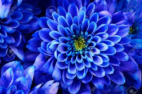「青い花 画像」の画像検索結果
