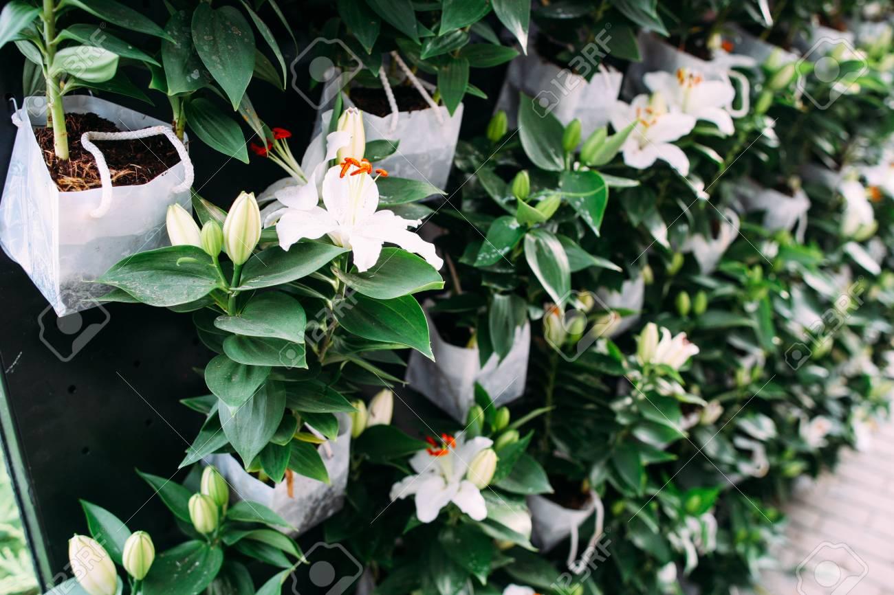 belle floraison fond vert stand avec ensemble de fleurs blanches d ete charmant decor frais accueil jardin boutique de fleuriste notion