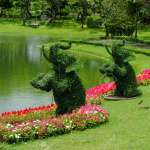 Topiary Gardens Elephants Created From Bushes At Green Animals Stock Photo Picture And Royalty Free Image Image 149794367
