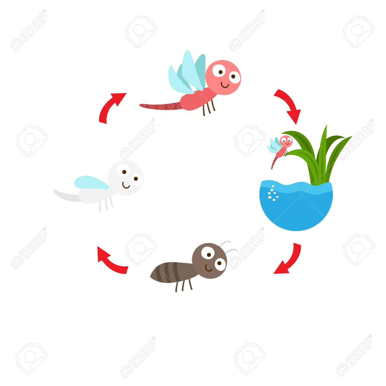 Illustration Of Dragonfly Life Cycle Royalty Free Cliparts Vectors And Stock Illustration Image 98261672