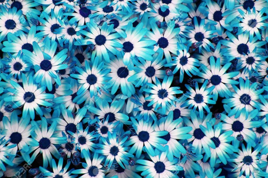 Blue Flowers As Very Nice Natural Background Stock Photo  Picture     blue flowers as very nice natural background Stock Photo   17816183