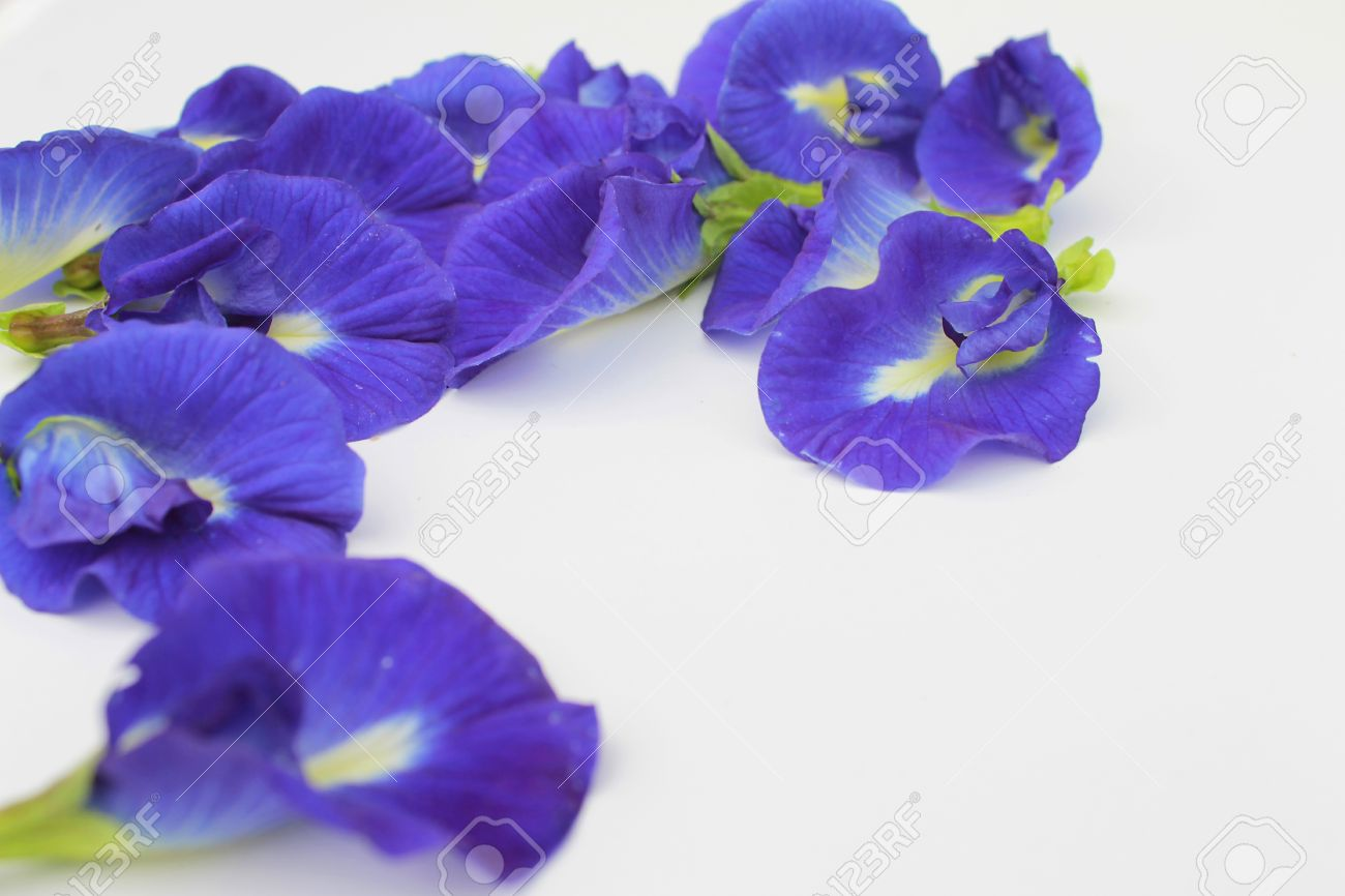 Blue Butterfly Pea Flowers On White Background Stock Photo  Picture     Blue Butterfly Pea Flowers on white background Stock Photo   14215773